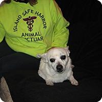 Adopt A Pet :: PACKMAN - Port Clinton, OH