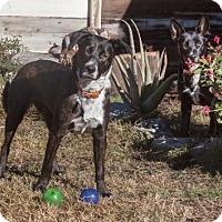 Adopt A Pet :: Frida - Orange, CA