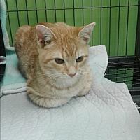 Adopt A Pet :: Jill - Barnwell, SC