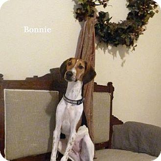 Greyhound/Beagle Mix Dog for adoption in Wytheville, Virginia - Bonnie