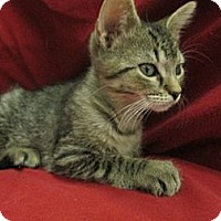 Adopt A Pet :: Mau - Richland, MI