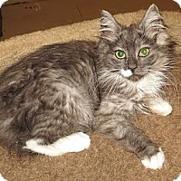Adopt A Pet :: Daisy - Catasauqua, PA