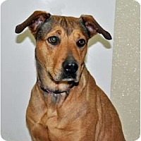 Adopt A Pet :: Cinnamon - Port Washington, NY