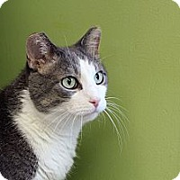 Adopt A Pet :: Quimby - Chicago, IL
