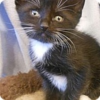 Adopt A Pet :: Bruno - Reston, VA