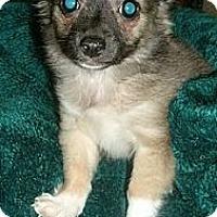 Adopt A Pet :: Romeo - Garden Grove, CA