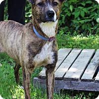 Adopt A Pet :: Marnie - Starkville, MS