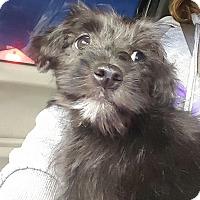 Adopt A Pet :: Tito - Sussex, NJ