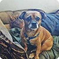 Adopt A Pet :: Babett - Denver, CO