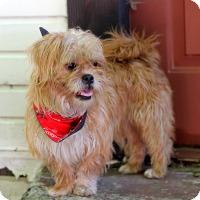 Adopt A Pet :: Sadie - Dalton, GA