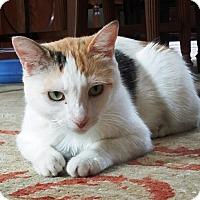 Adopt A Pet :: Myra - Orange, CA