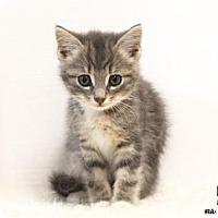 Adopt A Pet :: Kirrie - Washington, DC