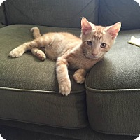 Adopt A Pet :: Luke - Millersville, MD