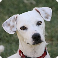 Adopt A Pet :: Dora - Edmonton, AB