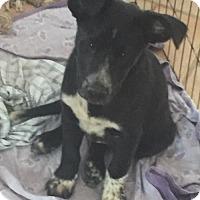 Adopt A Pet :: Hashbrown - Salt Lake City, UT