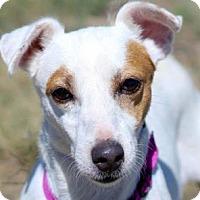 Adopt A Pet :: Beatrice - Colorado Springs, CO