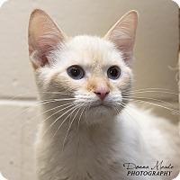 Adopt A Pet :: Waldo - Troy, OH