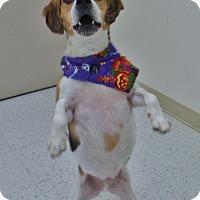 Adopt A Pet :: Sebastian - Chambersburg, PA