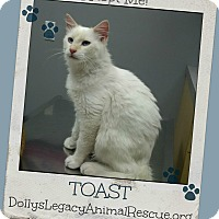 Adopt A Pet :: TOAST - Lincoln, NE