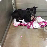 Adopt A Pet :: December - Bryan, OH