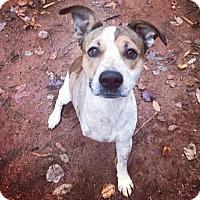 Retriever (Unknown Type) Mix Dog for adoption in Alpharetta, Georgia - Corden