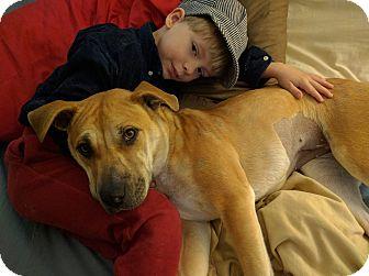 Shar Pei Mix Dog for adoption in Richmond, Virginia - Lulu
