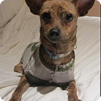 Adopt A Pet :: Niko - 6 lbs - Warwick, NY
