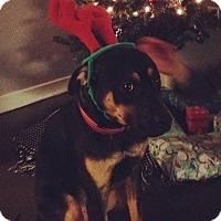 Adopt A Pet :: Murphy - Overland Park, KS
