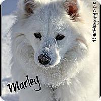 Adopt A Pet :: Miss Marley - Elmhurst, IL