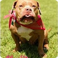 Adopt A Pet :: Phyllis - Dallas, PA