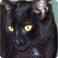 Adopt A Pet :: Tinker - Delmont, PA