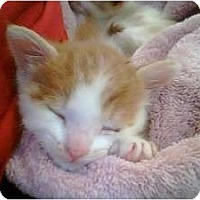 Adopt A Pet :: Brando & Jonny - Island Park, NY