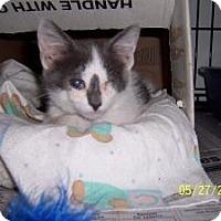 Adopt A Pet :: Chance - Island Park, NY