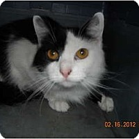 Adopt A Pet :: Sprinkles - Riverside, RI