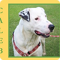 Adopt A Pet :: CALEB - Dallas, NC
