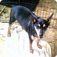 Adopt A Pet :: Rambo - Moulton, AL