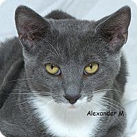 Adopt A Pet :: Alexander M - Sacramento, CA