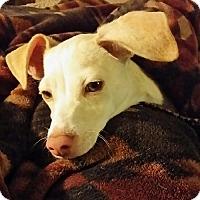Adopt A Pet :: Sonny - Las Vegas, NV