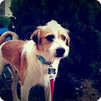 Adopt A Pet :: Jake - Santa Ana, CA
