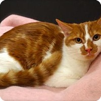 Adopt A Pet :: Ginger - Raritan, NJ