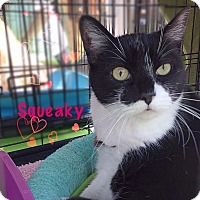 Adopt A Pet :: Squeaky - Foothill Ranch, CA