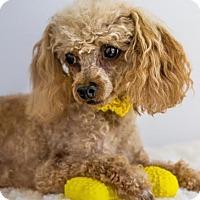Adopt A Pet :: Jubilee - Phelan, CA