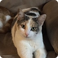 Adopt A Pet :: Callie - Brampton, ON