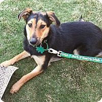 Adopt A Pet :: Anna - Alpharetta, GA