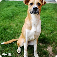 Adopt A Pet :: Princess - Appleton, WI
