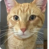 Adopt A Pet :: Indy - Springdale, AR