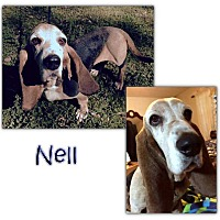 Basset Hound Dog for adoption in Marietta, Georgia - Nell