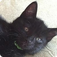 Adopt A Pet :: Galt - Colorado Springs, CO