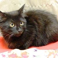 Adopt A Pet :: Ceasar - Columbus, NE