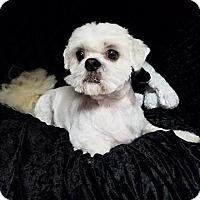 Adopt A Pet :: Beau Turner - Urbana, OH